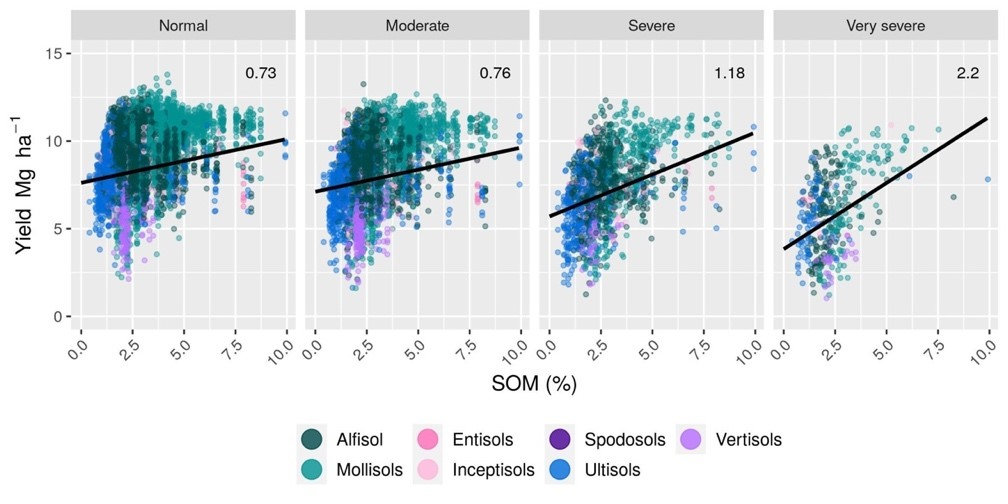 Relationships between corn yield and soil organic matter concentration, at the county-level, for rain-fed U.S. agriculture for common soil orders