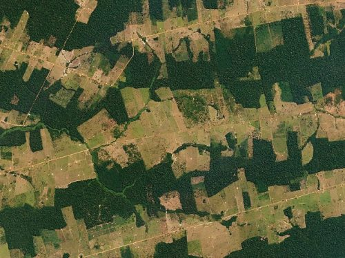 Forest and Fields, Rondônia, Brazil, July 18, 2016